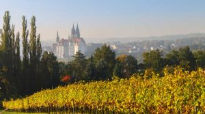 Albrechtsburg Mit Wein Daniel Bahrmann