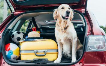 A los españoles nos gusta viajar con nuestras mascotas